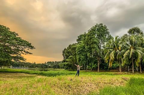 Парк Малайзия закат природа пальмы