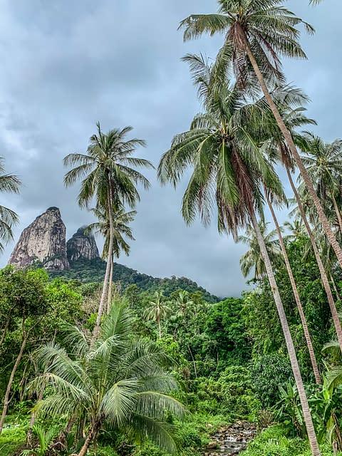 пальмы и гора на острове Тиоман Малайзия