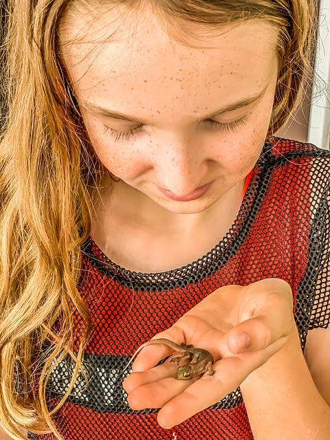 маленький геккон на ладони