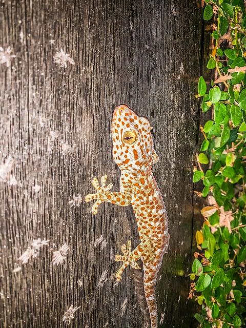 ящерица геккон на охоте